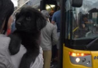 Las Palmas de Gran Canaria: Guaguas regula los viajes a bordo de pequeñas mascotas