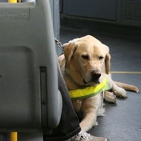 La Rioja permitirá a las mascotas viajar en transporte público